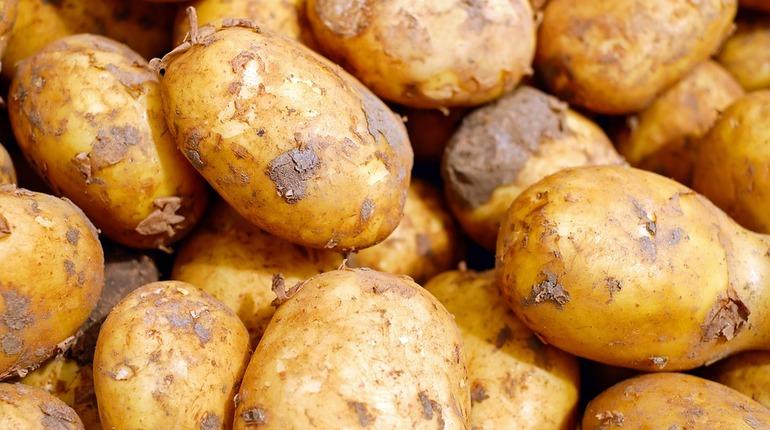 Под Челябинском четверо насмерть надышались гнилым картофелем