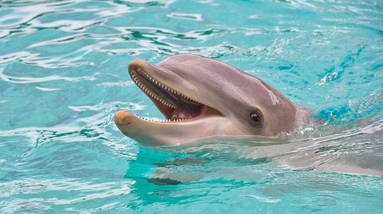 Открытие дельфинария и первый штраф за неразмещенный анализ на COVID-19: итоги 7 сентября в Петербурге