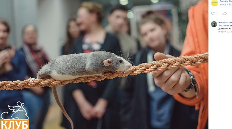 В Ленэкспо привезут крыс-канатоходцев и жука Валеру
