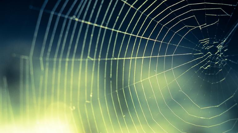 Ученые преобразовали структуру сети паука в музыку