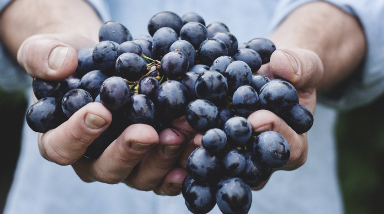 В порту Петербурга Россельхознадзор заметил пупариев в индийском винограде