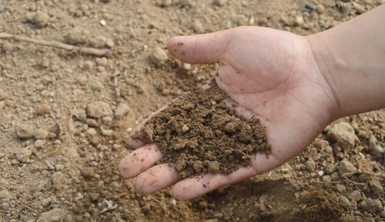 Петербургские депутаты планируют включить мониторинг почв в систему государственного экомониторинга