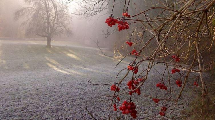 Заморозки наступают: холода ожидаются в Карелии и Сибири