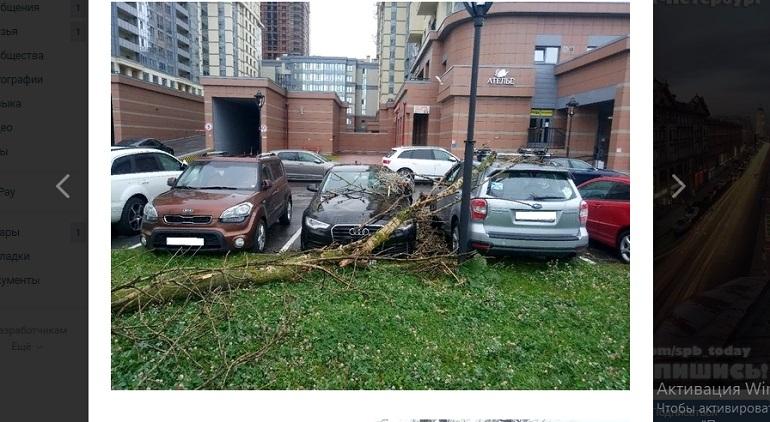 Упавшее на Московском дерево придавило припаркованные машины