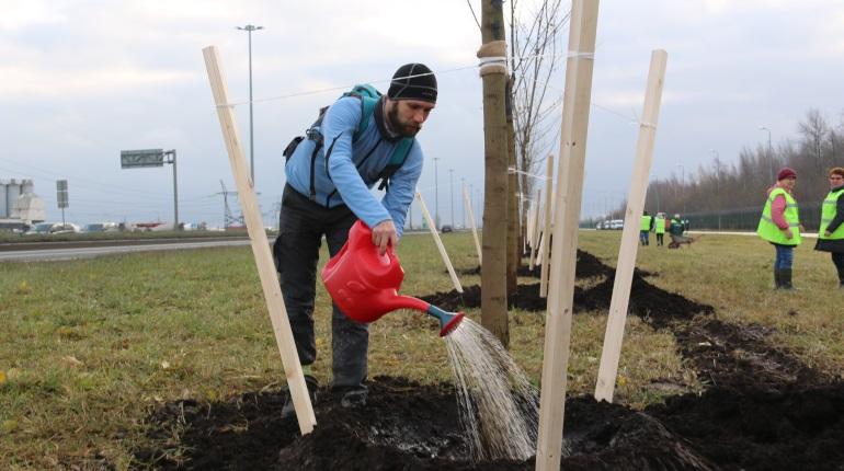 Петербуржцы придут на первомайскую демонстрацию с лопатами и деревьями