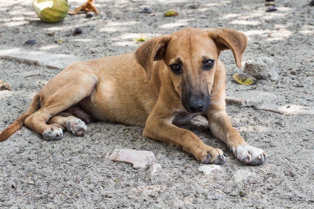 В садоводстве под Петербургом проверяют массовую гибель собак