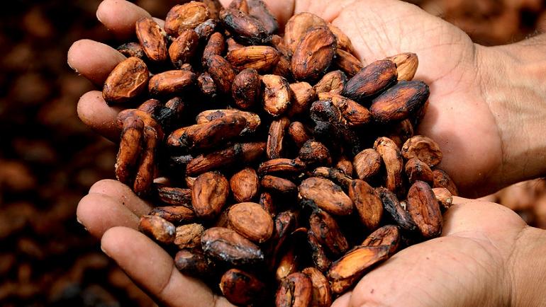Доказана польза какао для умственной активности
