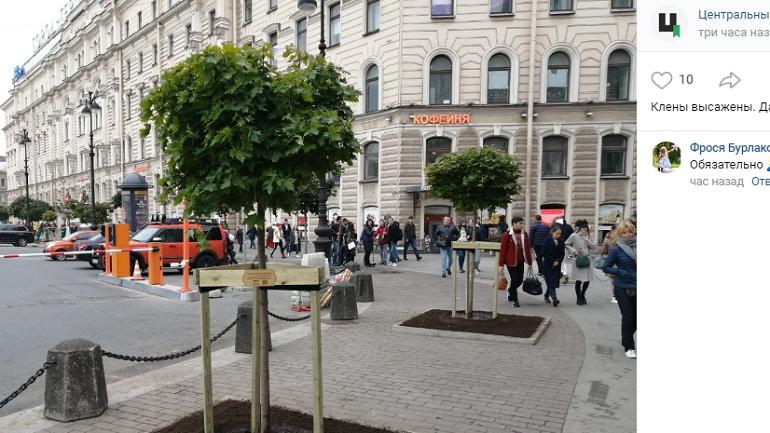 Площадь Восстания засадили кленами