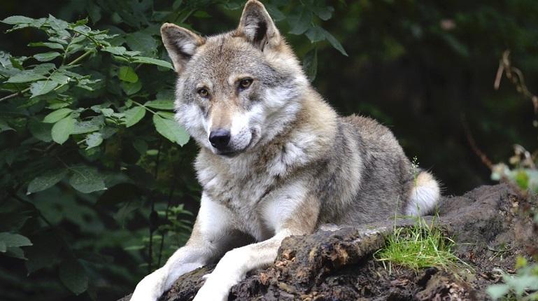 Волки напали на людей в Крыму