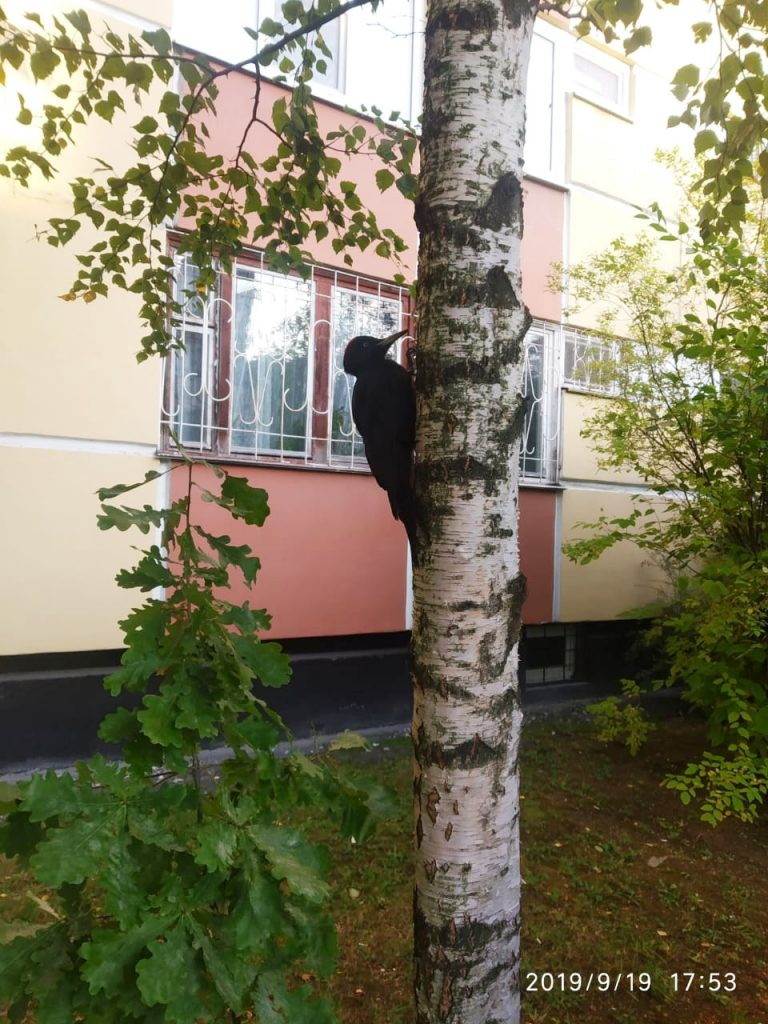 Руки прочь от птиц: петербуржцев просят не жалеть пернатых