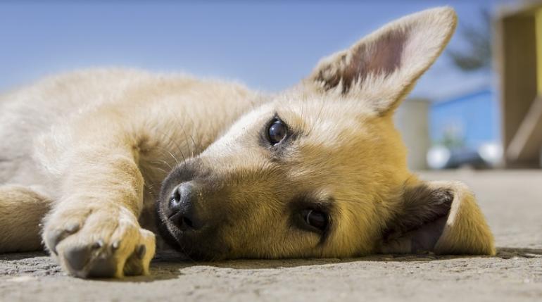 Стало известно, сколько в Петербурге тратят на бездомных животных