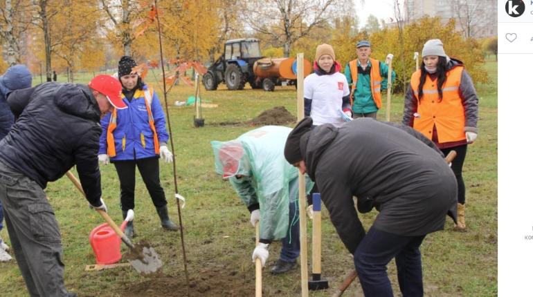 Рублевский ушел из Смольного, оставив «традицию» по посадке деревьев-прутиков