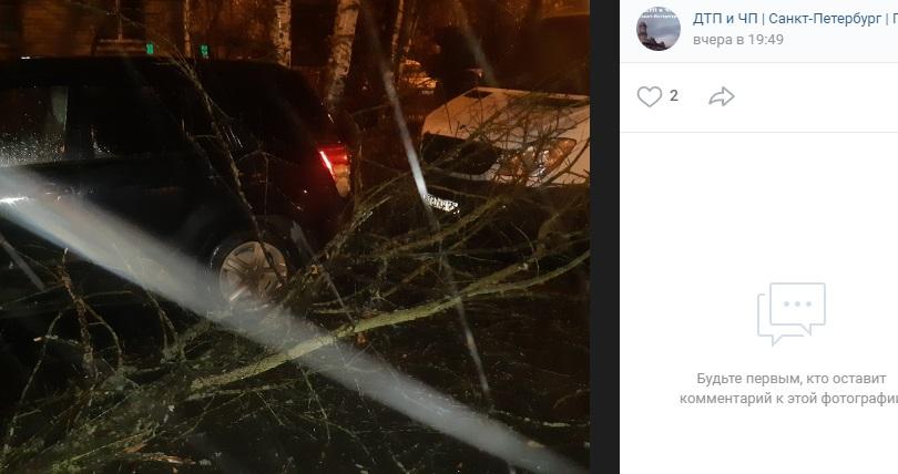 Ночью в Петергофе ураган сломал дерево, упавшее на иномарку