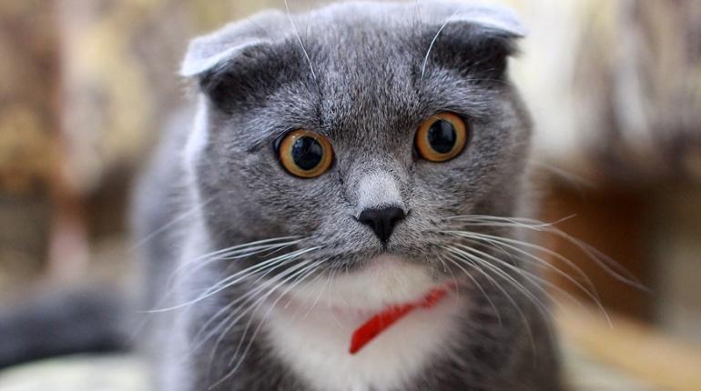 Яйца петербургских котиков снова в опасности: подчиненные Олега Эргашева опять ищут кастратора