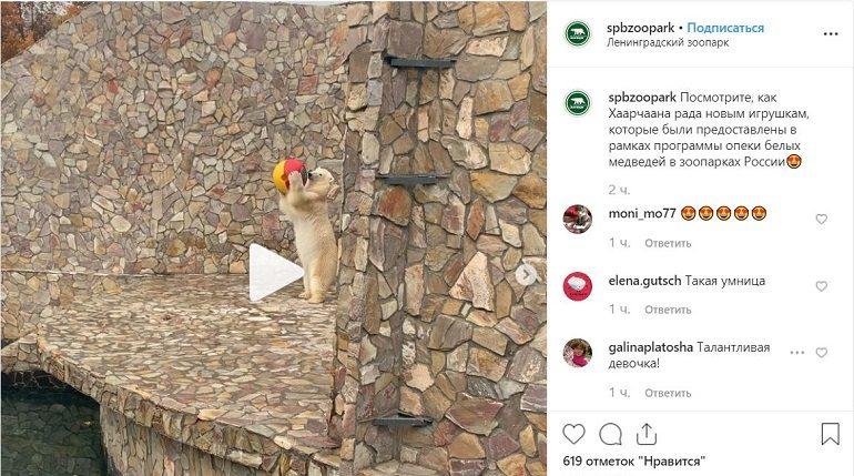 Новые игрушки обрадовали белую медведицу Хаарчаану в Ленинградском зоопарке