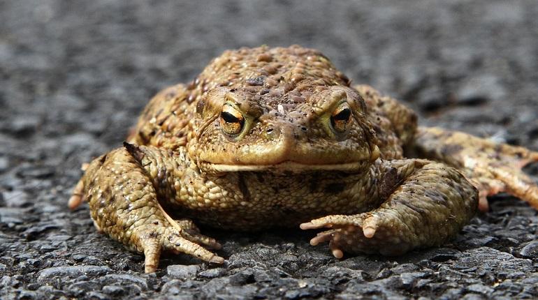 Водителей Петербурга попросили не давить лягушек на дороге