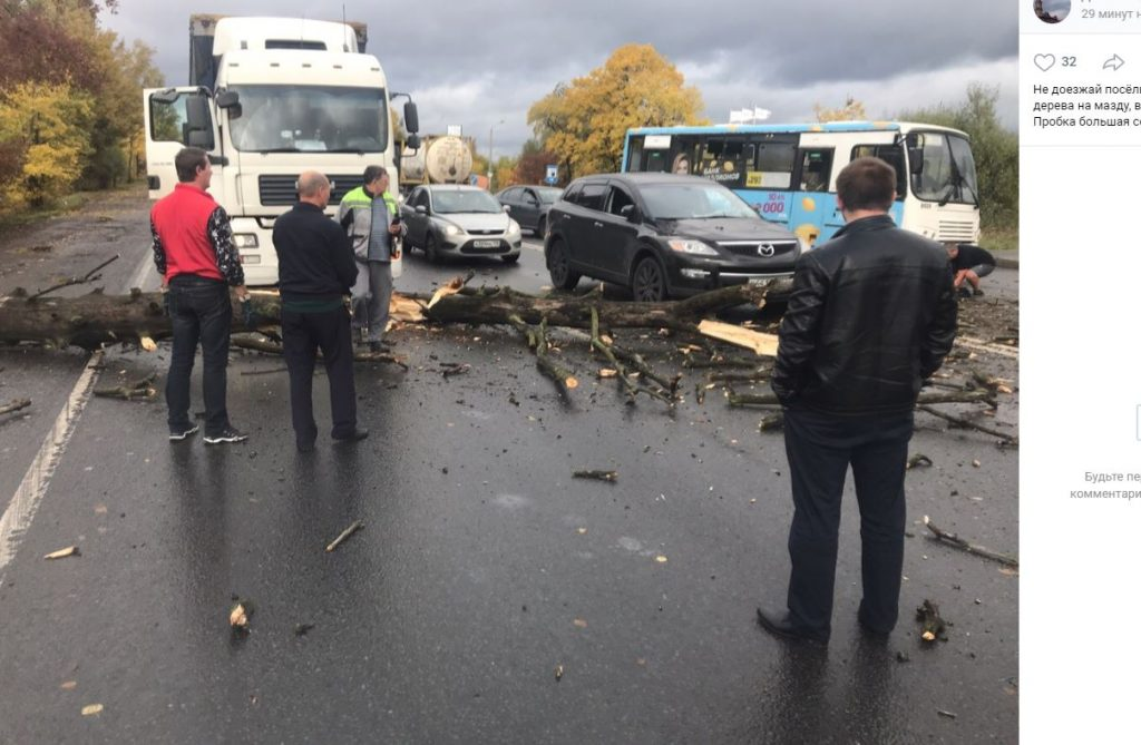 Упавшее из-за шторма дерево перекрыло выезд из Ленсоветовского
