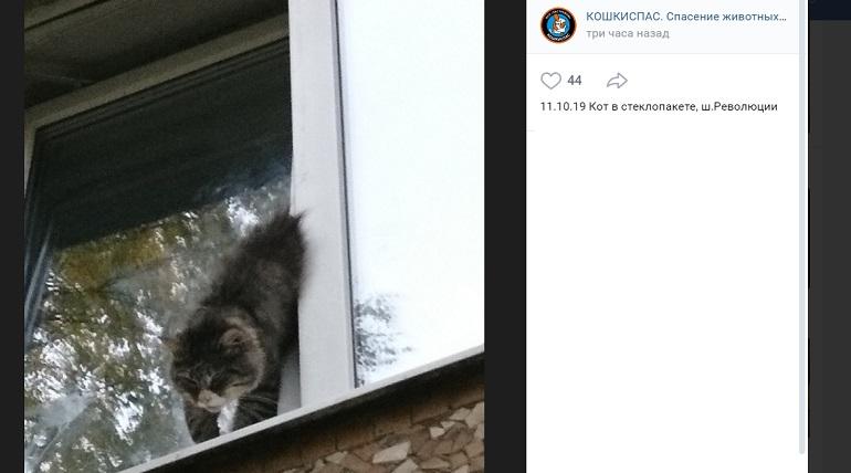 Кот застрял в стеклопакете на Революции: вытаскивали три часа