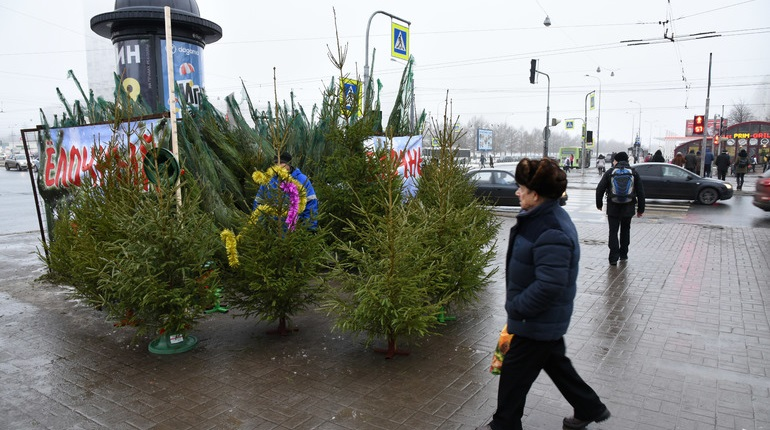 Где в Петербурге легально купить елку к Новому году