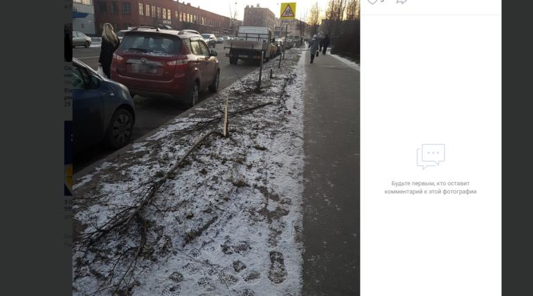Десяток лип-«прутиков» уничтожили хулиганы на улице Бабушкина