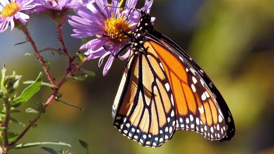 Ученые: в квантовом мире не существует «эффекта бабочки»