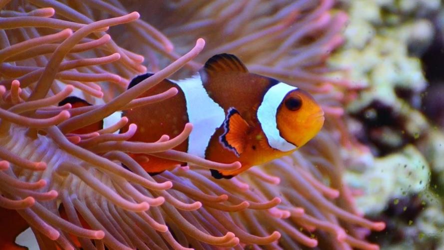 Углекислый газ стал причиной вымирания 95% морских существ на Земле