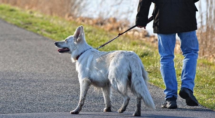 На прогулке с собакой в Петергофе мужчина нашел труп в сливной канаве