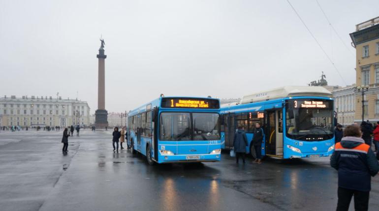 Автобусы цветов «Зенита» вышли на улицы: фоторепортаж «Мойки78»