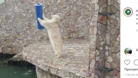 Белый медведь из Ленинградского зоопарка показал, как надо веселиться