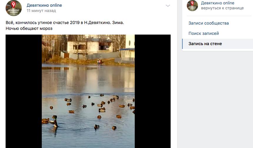 Морозы в Ленобласти: в Новом Девяткино утки вмерзают в лёд