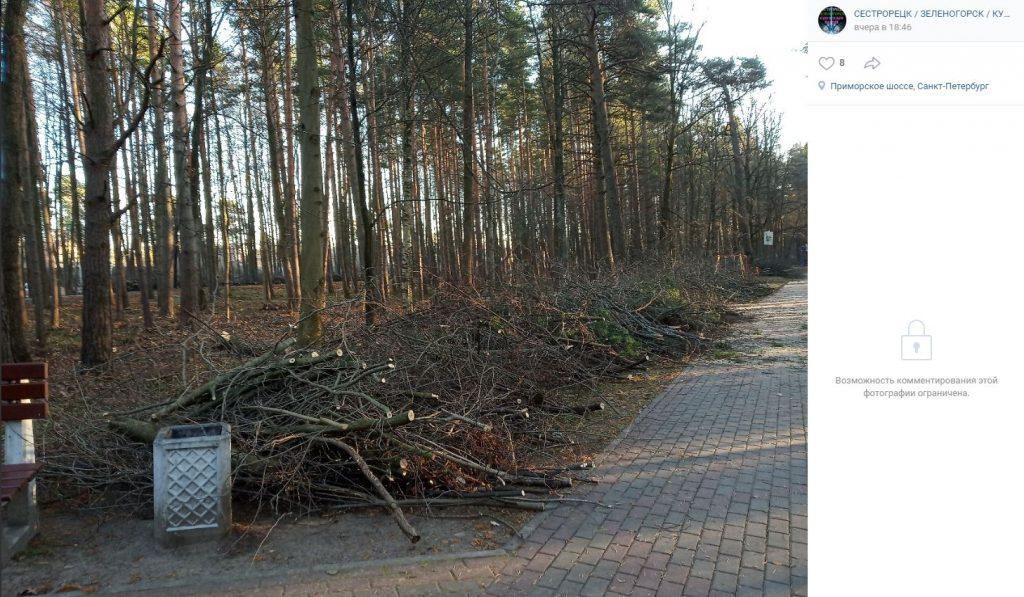Чиновники в Сестрорецке уничтожают сквер, потому что хотят сделать его краше