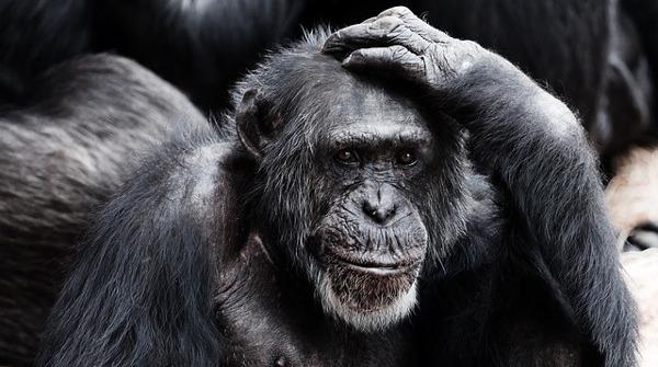 Останки древнего неизвестного примата обнаружили в Индии