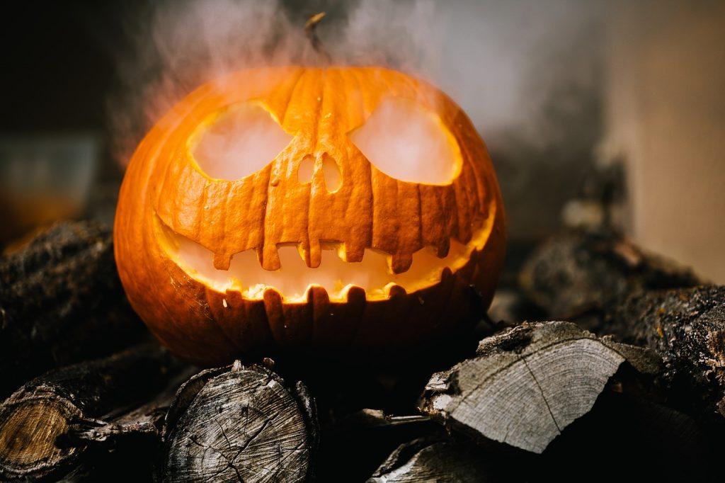 Петербуржцев просят отдать тыквы с Хэллоуина на корм лошадям