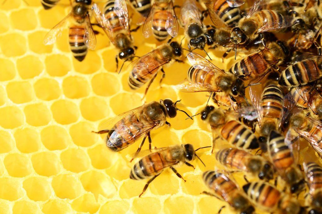 С помощью янтаря можно узнать цвет древнейших насекомых