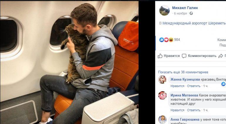 Мужчина не мог попасть на борт самолета из-за толстого кота, но выкрутился