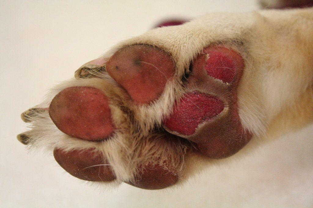 В Якутии нашли контейнер с сотнями убитых собак и кошек