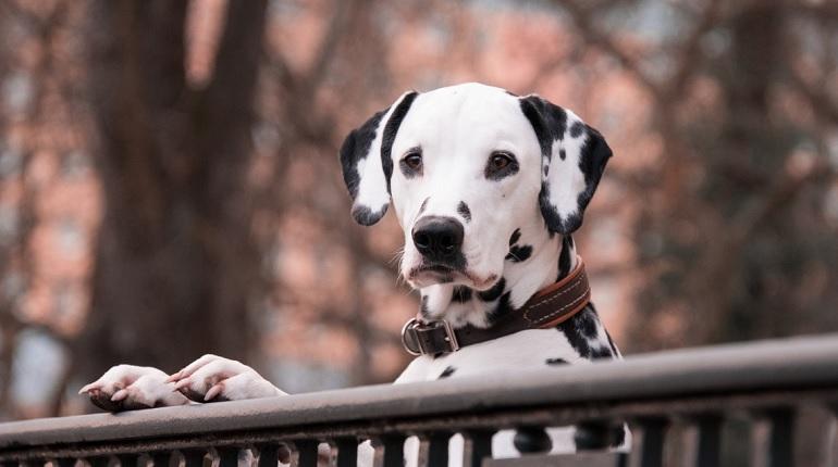 Искусственный интеллект сможет дрессировать собак без помощи человека