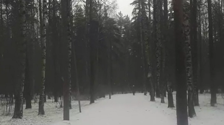 Снегопад вселил ложную надежду в петербуржцев