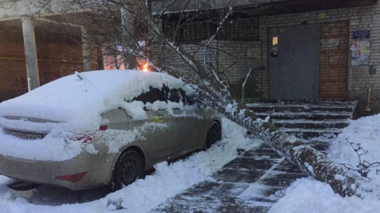 Снегопад роняет деревья на машины в Сосновом Бору
