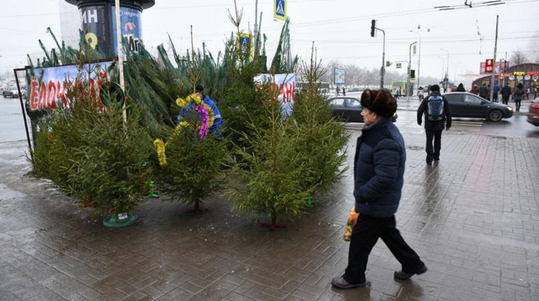 Новогодний символ петербуржцы смогут приобрести с 20 декабря