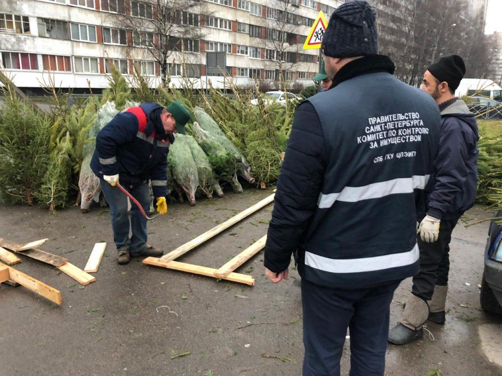 ККИ зачистил 12 нелегальных елочных базаров в районах Петербурга
