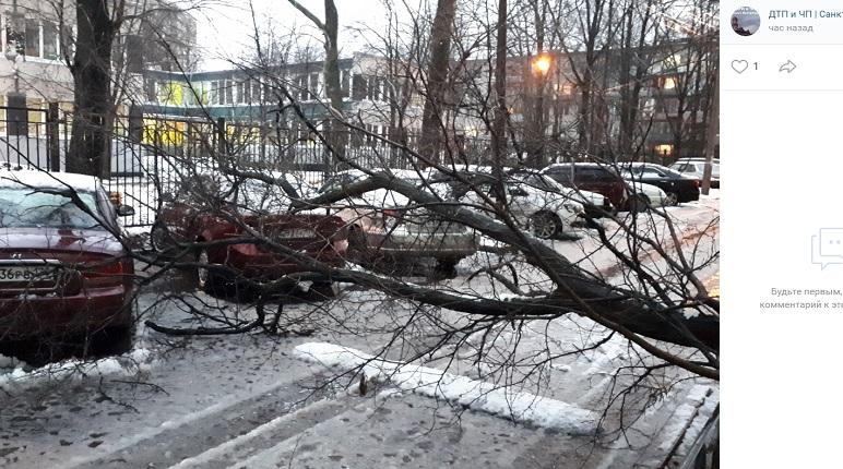 Шторм в Петербурге: еще одно дерево не устояло в Альпийском переулке