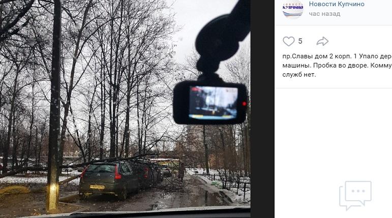 Минус два авто: третье поваленное ветром дерево нашли на проспекте Славы