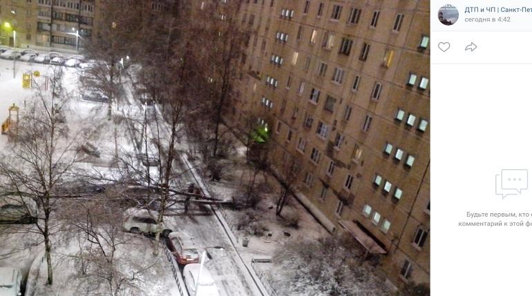 На Будапештской ветер повалил дерево на авто — грохот разбудил петербуржцев