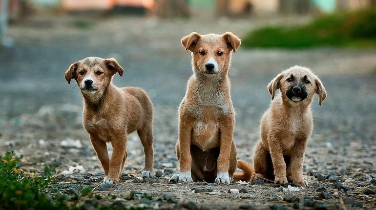 После отравления 150 собак в подмосковном приюте прокуратура начинает проверку
