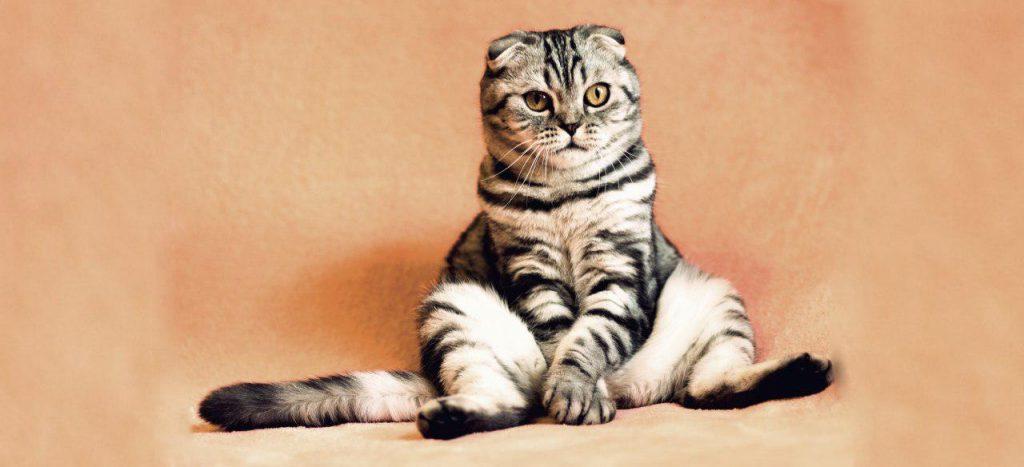 Ведомство Митяниной возьмет петербургских котиков за яйца