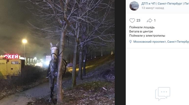 Ночью у «Электросилы» поймали лошадь — наездница в травмпункте