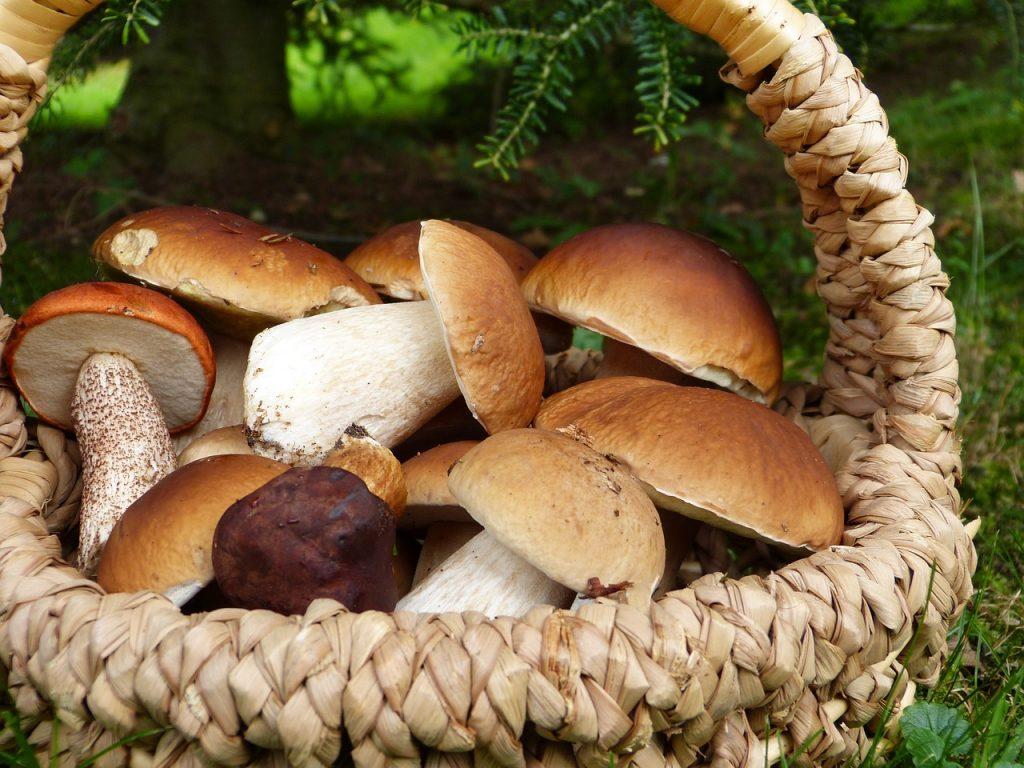 Названы опасные грибы, которые принято считать съедобными