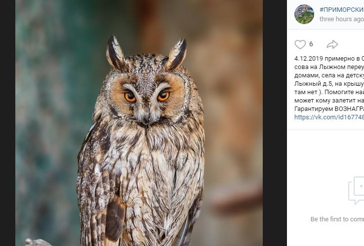В Петербурге отчаявшиеся хозяева ушастой совы дадут вознаграждение за ее поимку
