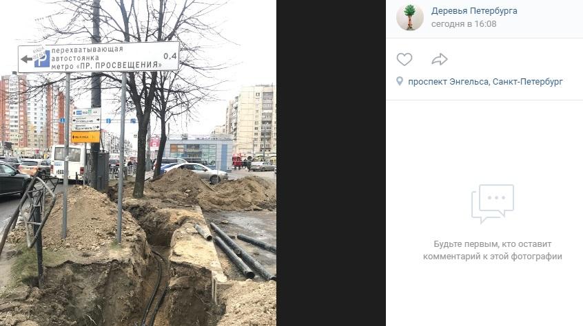 Петербуржцы делают ставки, сколько лип уничтожат после работ у метро «Проспект Просвещения»